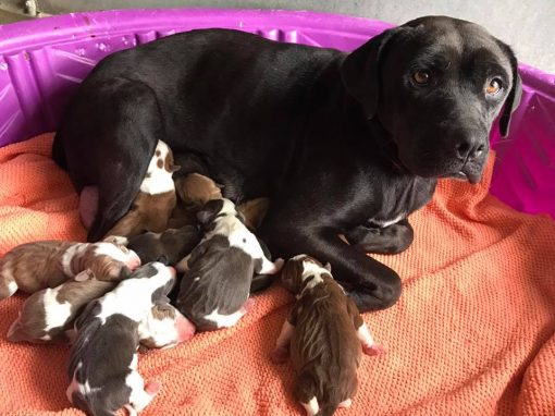 Berlyn and her puppies